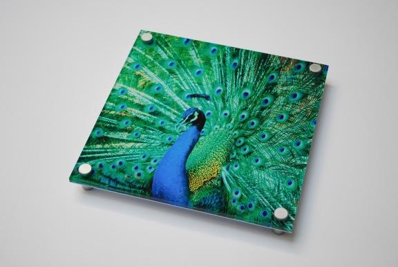 Peacock Photo Printed on Acrylic