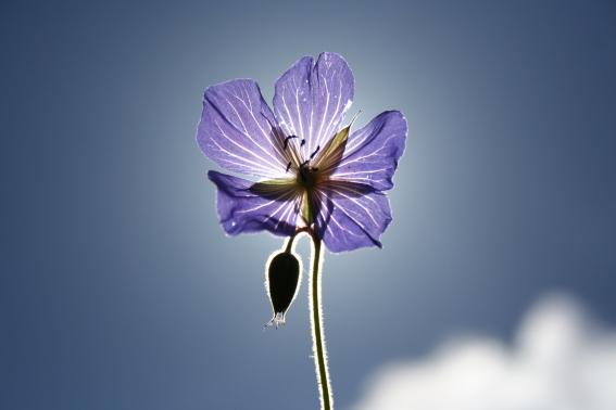 Flower Photo Using Backlighting