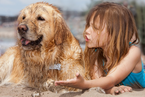 Fun beach photography girl with dog covered in sand