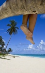 Legs hanging from palm tree at the beach with white sand