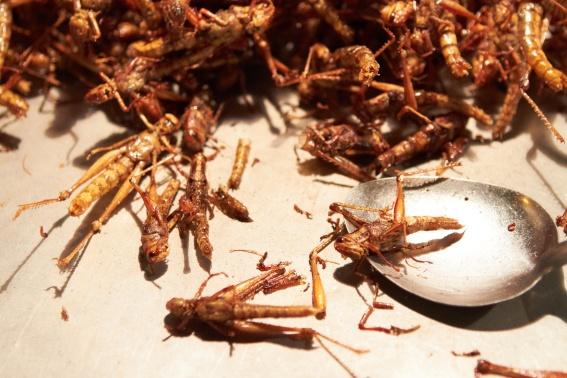 Thailand street market fried grasshoppers