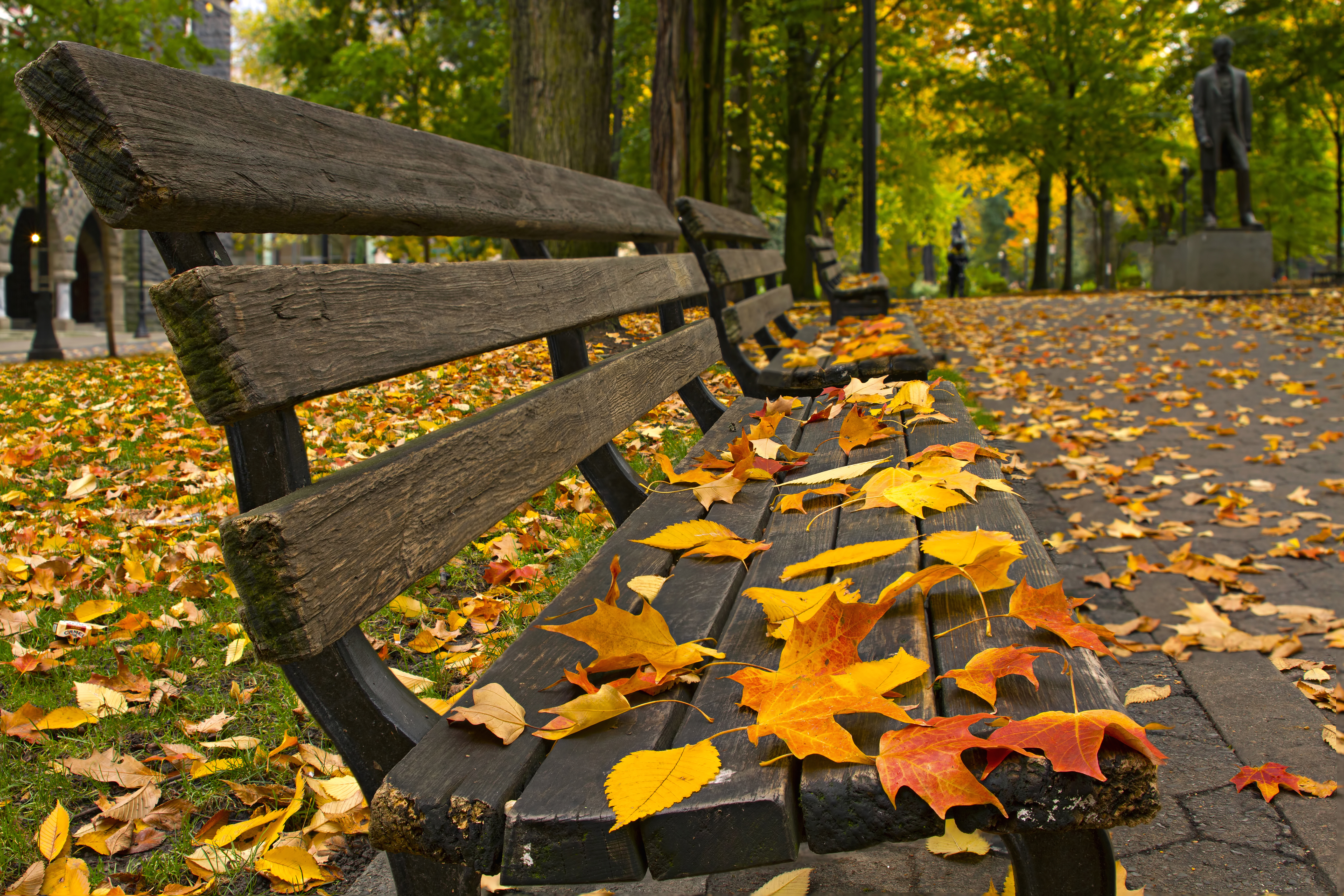 autumn leaves on bench - photo #2