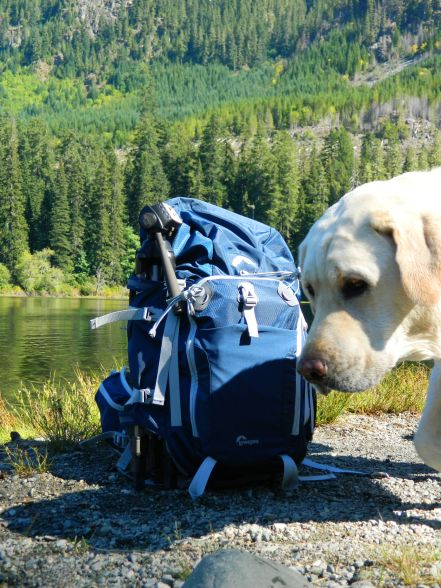 Dog Lake Lowepro Rover Pro 35L AW Camera Backpack