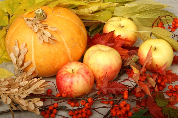 Autumn Harvest Photo