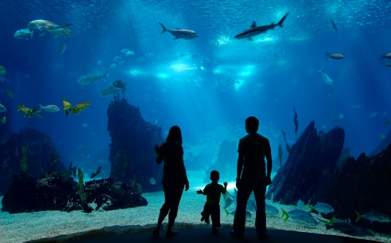 Silhouette of kids looking through aquarium glass at fish