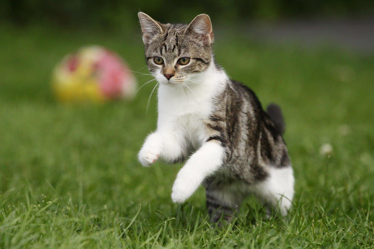 https://posterjackcanada.files.wordpress.com/2014/03/cat-jumping-playing-grass.jpg
