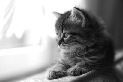 Black and white photo of a kitten on a windowsill