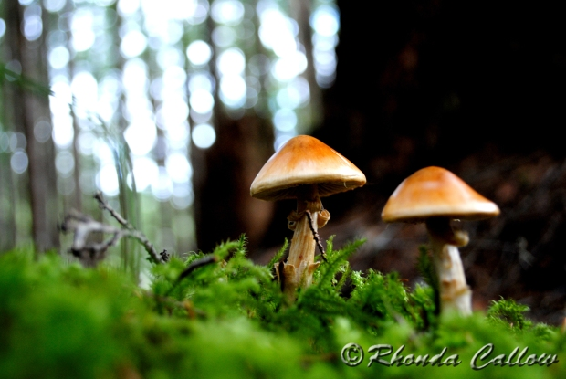 Two Mushrooms and Moss on Forest Floor Vancouver Island British Columbia Canada