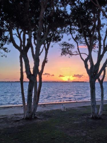 Ocean Sunset Dog Trees