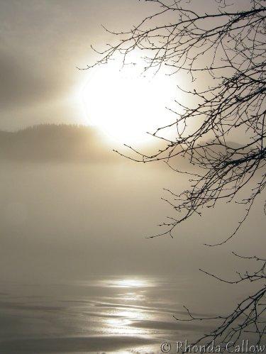 Sun Trees Haze