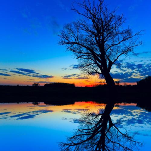 Old Tree Reflection on Water at Sunset