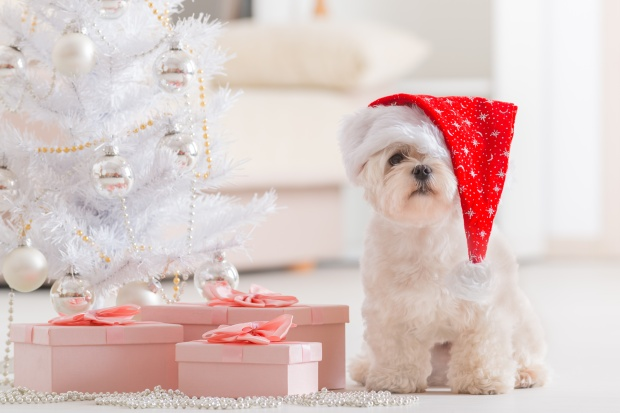 Cute Little Puppy Wearing a Santa Hat by Christmas Tree and Gifts
