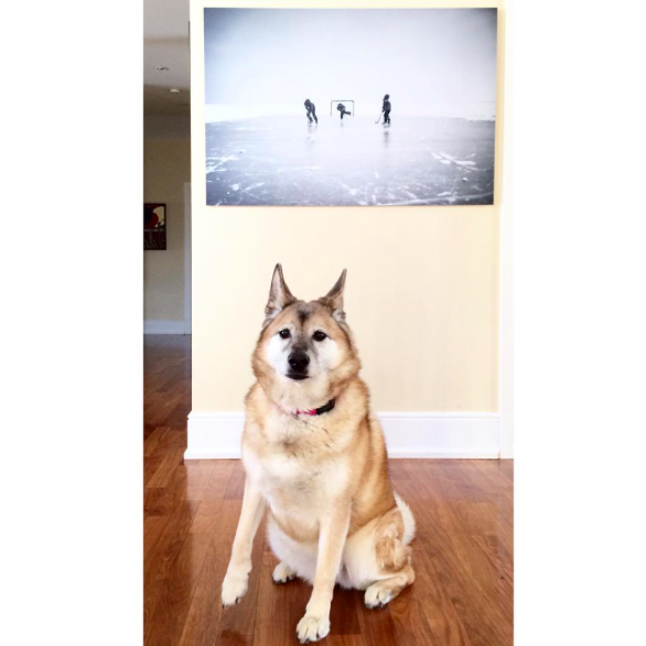Winter Outdoor Ice Hockey Photo Printed with Dog in Foreground