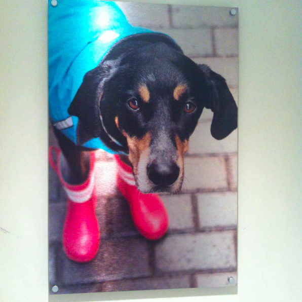 Cute Dog Wearing Rain Boots Printed on Metal